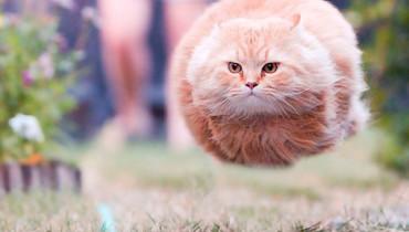soy-un-gato-volador