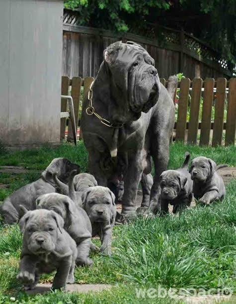 un-desfile-de-cachorros