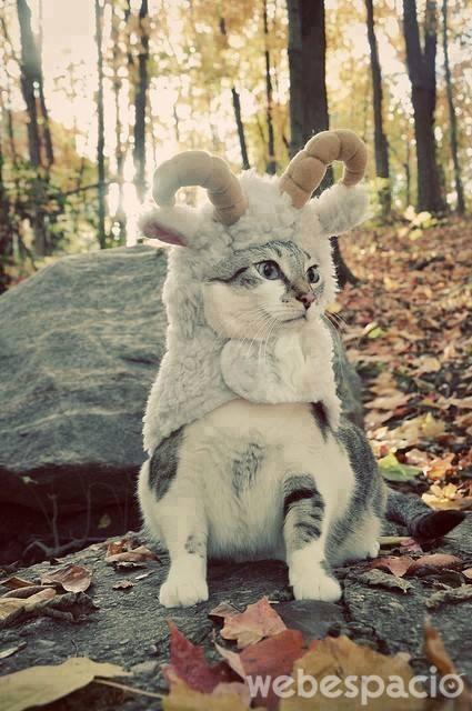 un-gato-reno