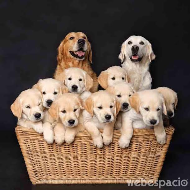 una-familia-eternamente-feliz
