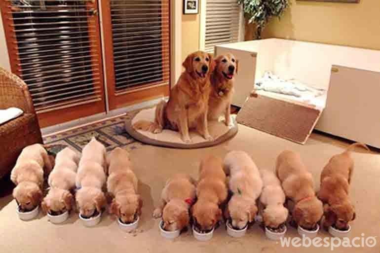 una-familia-muy-feliz