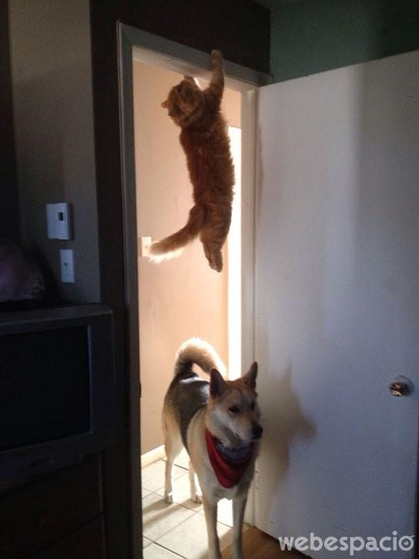 uy-ahi-viene-el-perro