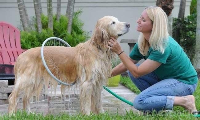 ducha-para-perros