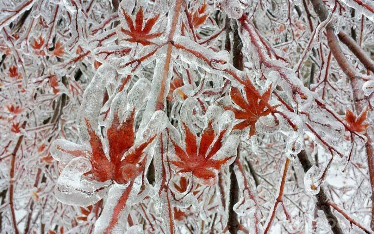arboles-despues-de-la-tormenta-de-hielo