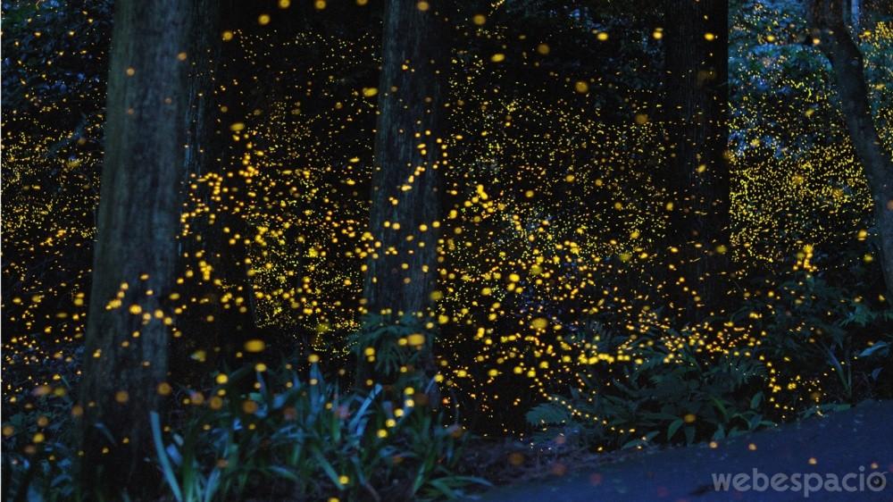 bosque-de-luciernagas