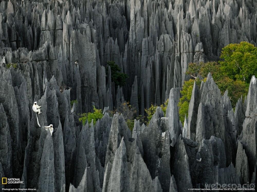 bosque-de-piedra