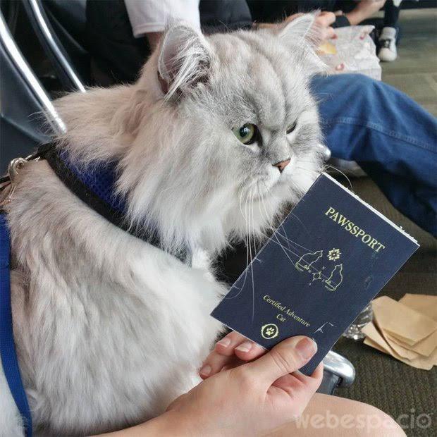 gandalf-pasaporte