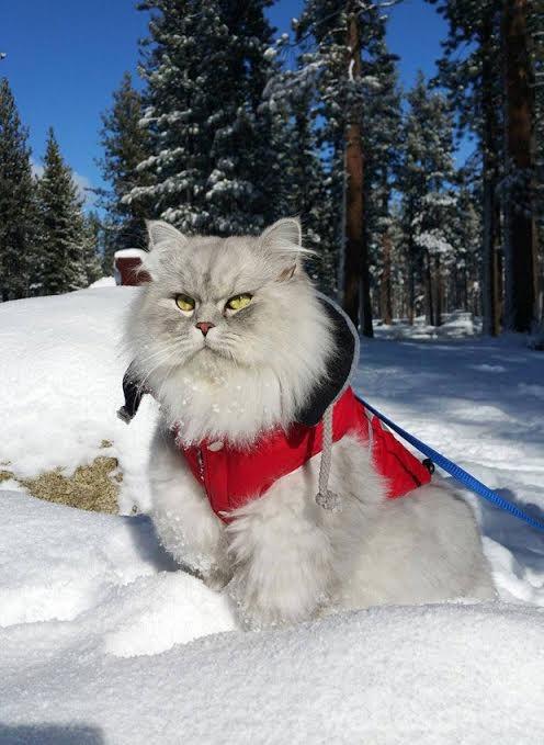 un-gato-en-la-nieve