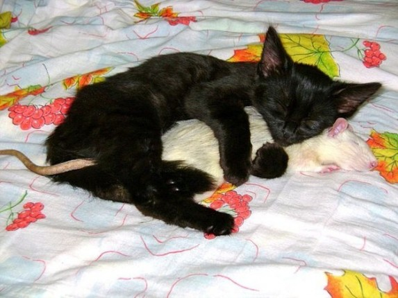 gato y rata abrazandose