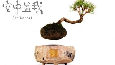 air bonsai