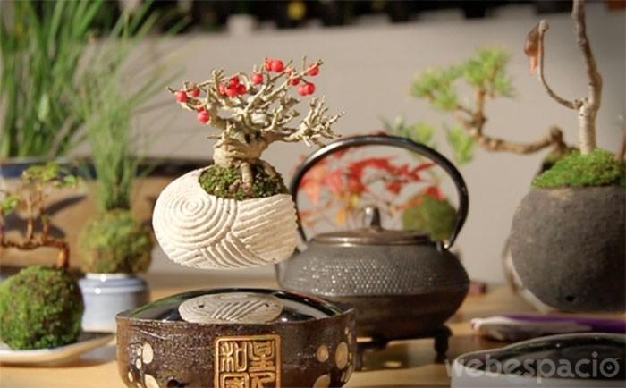 arbol bonsai flotante
