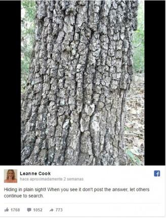 Serpientes camufladas en un arbol gris